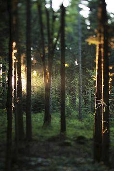 bosque === .