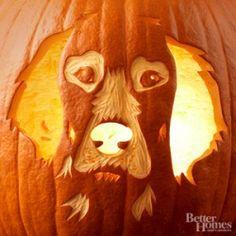 Pumpkin Jack Lanterns dog | Jack O'Lanterns For Dog Lovers!