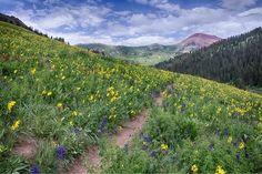 italy wildflower landscape | Wildflower Bloom in the Maroon Bells Wilderness Colorado
