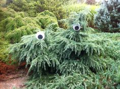 Googly Eye Tree at the U.S. National Arboretum
