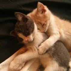 Kitten hugs. #hugs #kittenhugs #cat #kitten #adorbs #adoptacat #Toronto #catsofIG