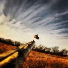 Pheasant Hunting in Colorado