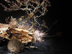第94回 草月いけばな展 「花ときめき」(前期)-6 の画像 草月流生け花とフラワーアレンジブログ -Ikebana, Икэбана-