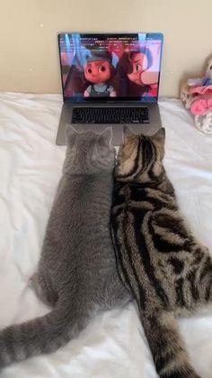 Funny Animal Memes, Cute Funny Animals, Cute Baby Animals, Cute Animal Videos, Cute Animal Pictures, Cute Cat Gif, Cute Cats, Pet Tiger, Cute Creatures