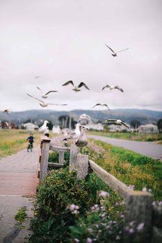 half moon bay, CA Half Moon Bay, John Muir, California Dreamin', Golden Gate, Railroad Tracks, Scenery, Ocean, City, Places