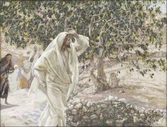 """""""The next morning as they were leaving Bethany, Jesus was hungry.  He noticed a fig tree in full leaf a little way off, so he went over to see if he could find any figs. But there were only leaves because it was too early in the season for fruit."""" ~Mark 11:12-13"""