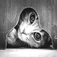 A vida misteriosa dos gatos em fotos em preto e branco