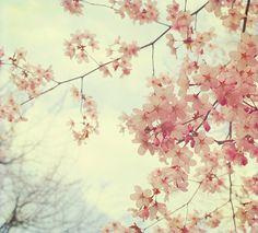 Flowers in bloom at Jardin du Luxembourg, Paris! From Ida Pyk's blog.