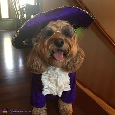 Prince Let's Go Crazy Dog Costume