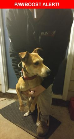 Is this your lost pet? Found in Raleigh, NC 27603. Please spread the word so we can find the owner!    Nearest Address: Near Leadenhall Way, Raleigh, NC, United States