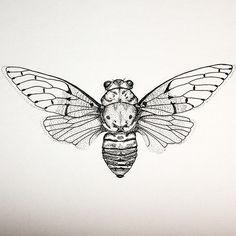 cicada illustration a5 fine art print tattoos pinterest a5 illustrators and printing. Black Bedroom Furniture Sets. Home Design Ideas
