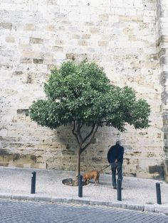 Senior man walking his dog, who is sniffing a tree - Photo of a older man walking his dog who is sniffing at a tree in Lisbon street, Portugal.