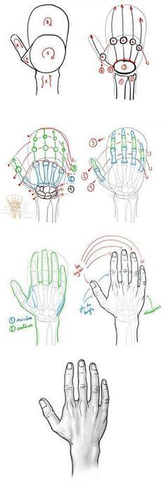 Drawing Tips Tutoriel : dessiner la main en vue dorsale. Drawing tip : drawing hand. Realistic Face Drawing, Male Figure Drawing, Human Drawing, Drawing Hands, Figure Drawing Reference, Manga Drawing, Drawing Lessons, Drawing Techniques, Drawing Tips