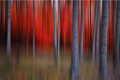 #Fall trees with reds and greens.  Painting in a slightly abstract way, by Philippe Sainte-Laudy.