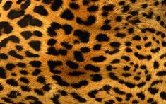 wallpaper | Leopard Print Wallpapers, Leopard Print Myspace Backgrounds, Leopard ...