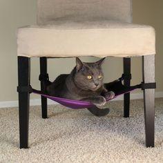 Katzen Hängematte auch für die kleine Wohnung!