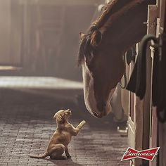puppy and horse getting to know each other