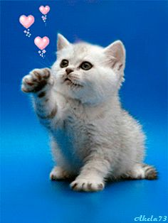 Discover & share this Animated GIF with everyone you know. GIPHY is how you search, share, discover, and create GIFs. Kitten Love, Kitten Gif, I Love Cats, Cute Baby Animals, Animals And Pets, Funny Animals, Cute Cats And Kittens, Kittens Cutest, Bisous Gif