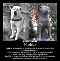 Hachico - Cada día acompañaba ha su dueño ha la estación de tren donde le esperaba ha la vuelta.´ Un día el dueño de Hachiko murió. Pero ha pesar de ello Hachiko siguió esperando ha su dueño durante 11 años. Hachiko es un claro ejemplo de  lo fiel que puede ser un perro con su dueño y que nosotros no estamos ha su altura.