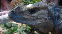 Lizard head. looks like a Dragon