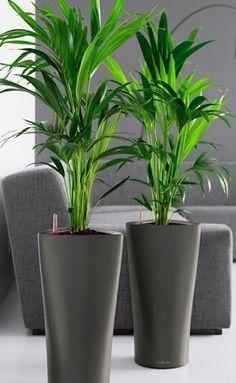 Double Mini Agave and Planter Decorative Plants (Double Mini Agave w ...