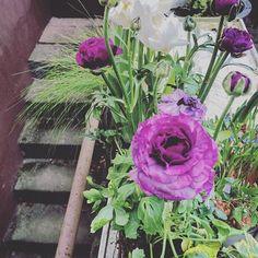 Ranunklarna blommar fint fortfarande  #blomsterglädje #instalike #instamood #instaflower #vakrehjemoginteriør #simplethings #simplicity #simplelife #purple