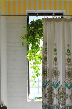 These hanging pothos perform double duty in this bathroom setting. They clean the air and act as a window shade