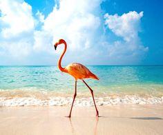 Playa Dominicus, Dominican Republic.