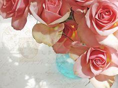 Pink roses...my favorite