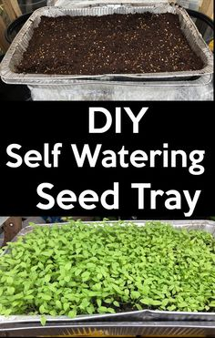 Self-watering seed starting Tray Save money by making your own self-waterin., DIY Self-watering seed starting Tray Save money by making your own self-waterin., DIY Self-watering seed starting Tray Save money by making your own self-waterin. Greenhouse Gardening, Container Gardening, Greenhouse Ideas, Hydroponic Gardening, Hydroponics, Homemade Greenhouse, Container Vegetables, Backyard Greenhouse, Small Greenhouse