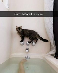 Funny Animal Pictures Of The Day 24 Pics Lustige Tierbilder des Tages 24 Pics - Funny Animals - Daily LOL Pics I Love Cats, Crazy Cats, Cool Cats, Silly Cats, Funny Cats In Water, Cute Funny Animals, Funny Animal Pictures, Animal Pics, Hilarious Pictures