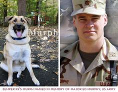 Veterans Programs, 19 Month Old, Service Dogs, Acceptance, Rescue Dogs, Lab, Homes, Houses, House