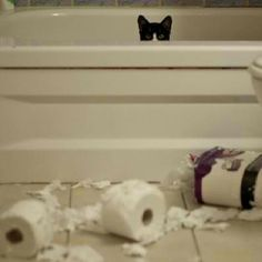 You can't hide from your mess, kitty!