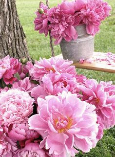 There is nothing like peonies in bloom!