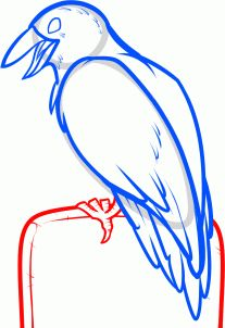 how to draw a halloween crow step 7