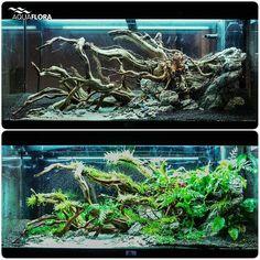 Aquarium Setup, Nano Aquarium, Diy Aquarium, Nature Aquarium, Aquarium Design, Aquarium Ideas, Aquarium Decorations, Aquarium Fish Tank, Planted Aquarium