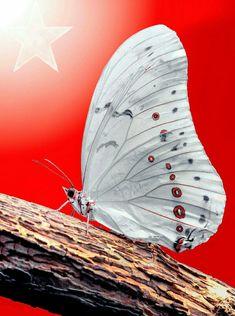 29 October by Mustafa Öztürk on 500px