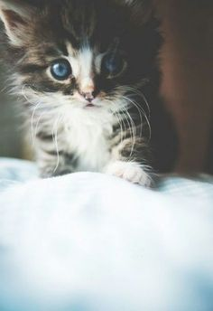 Cutie *-*