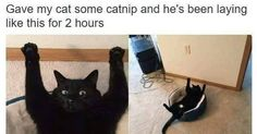 LINK to more funny pics of black cats GREAT!! :)