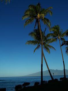 Maui   Beachfront.