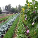 agriculturatransgenicos