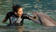 Top 5 Tips for Breaking into the Marine Mammal Training Field - Find out a Dolphin Quest trainer's top 5 tips for starting a career as an animal trainer.