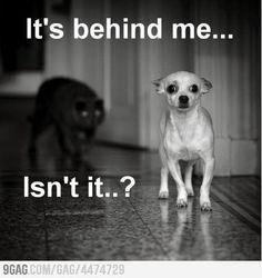 dog fright.