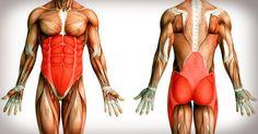 V oblasti bruška a bokov som schudla o 2 veľkosti, a to bez cvičení a diéty! Bnf, Anatomy And Physiology, Pilates, Bodybuilding, Health Care, Sports, How To Make, Pop Pilates, Hs Sports