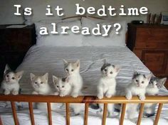 I would always find room on my bed for this clowder of kitties!