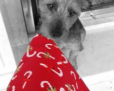 Dog bandana/scarf red and white Christmas candy canes