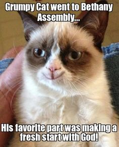 grumpy cat Meme   Slapcaption.com