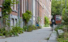 Geveltuinen - In een groenere straat is het fijner en gezonder om te wonen.