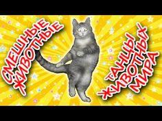 Танцы животных мира ● Приколы с животными лето 2014 ● Funny Animals Compilation ● Dancing  Животные танцуют под музыку. Очень прикольно и зажигательно )))))