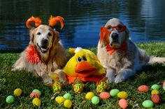 Happy Easter from Brie and Bentley